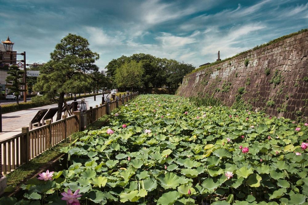 鶴丸城のお堀と蓮の花