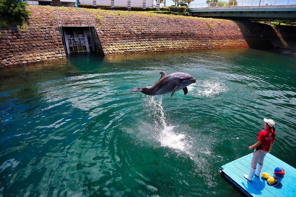 鹿児島水族館のイルカ