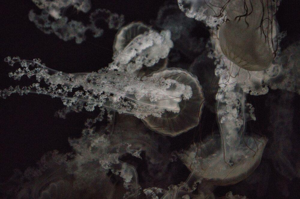 鹿児島水族館のクラゲ