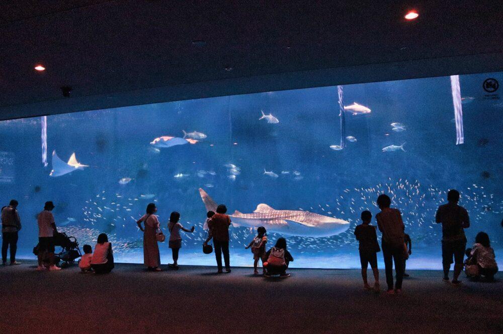 鹿児島水族館のジンベイザメ
