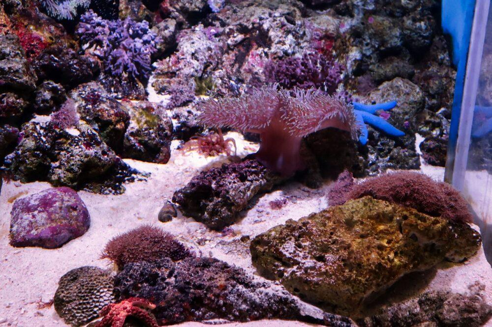 南西諸島のサンゴ