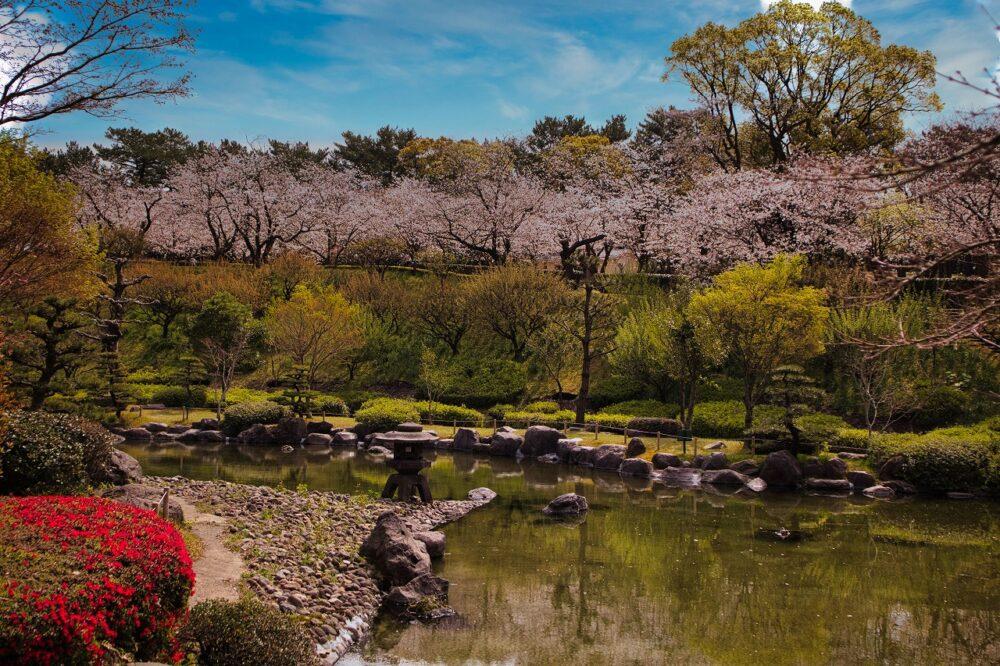 3月(吉野公園の桜)