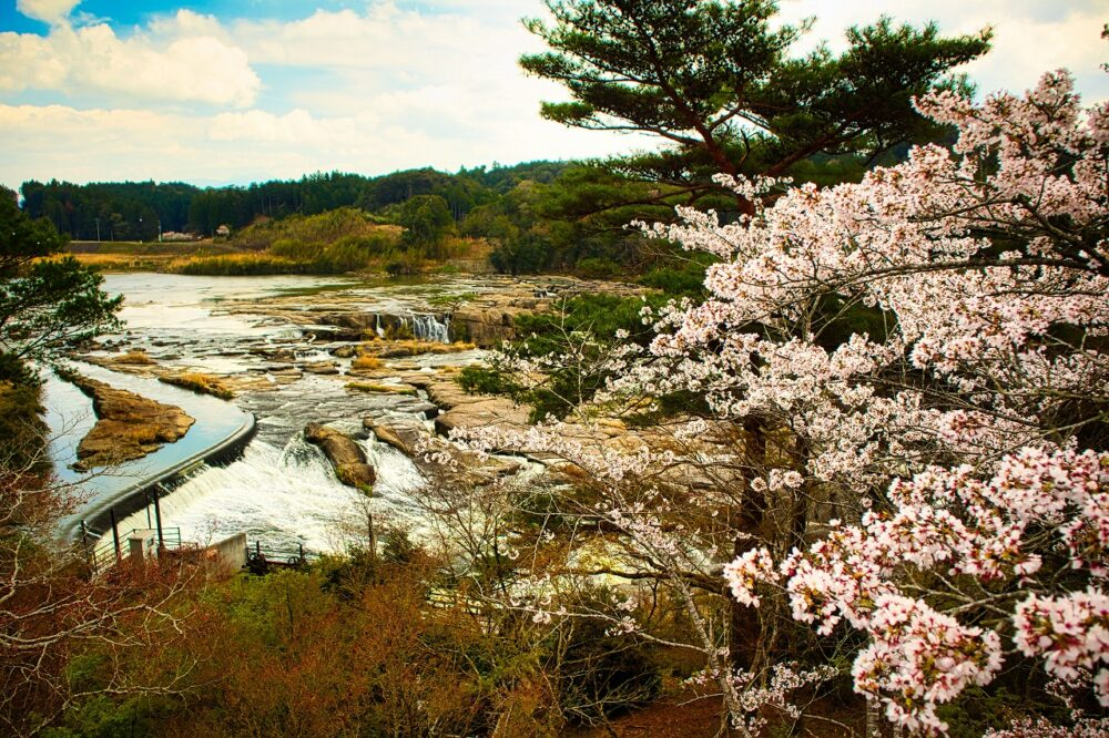 曽木の滝と桜