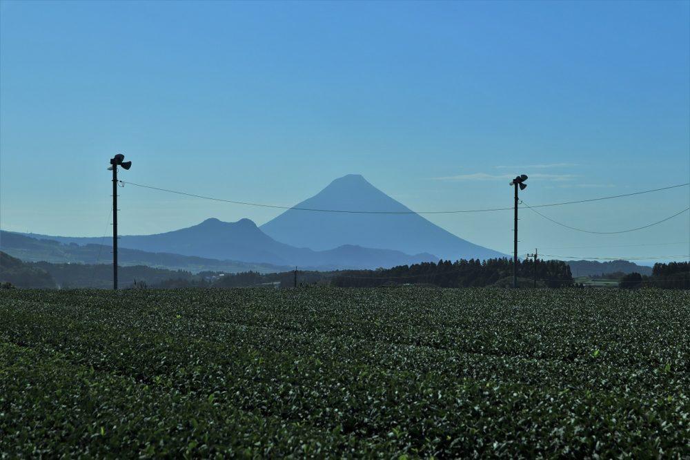 お茶畑からの開聞岳