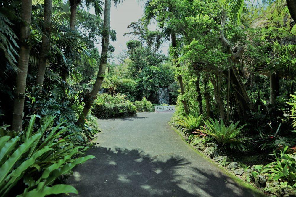 ジャングル花の谷