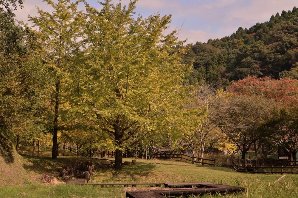 岩屋公園の秋