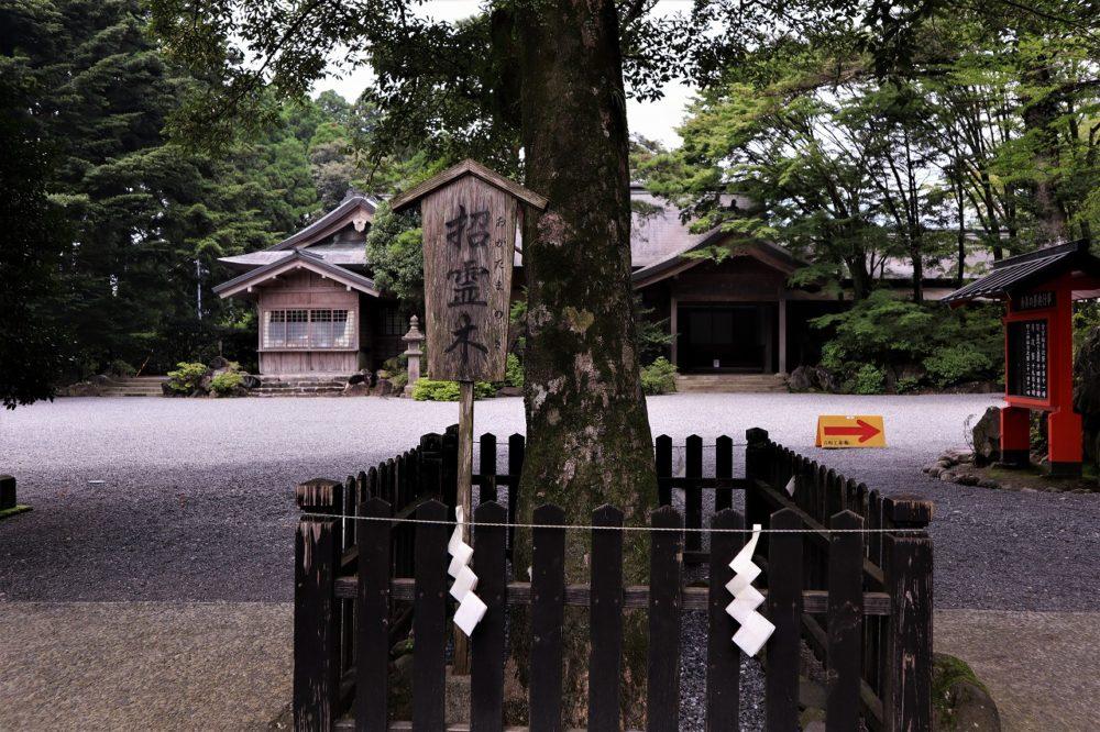 霧島神宮の招霊木
