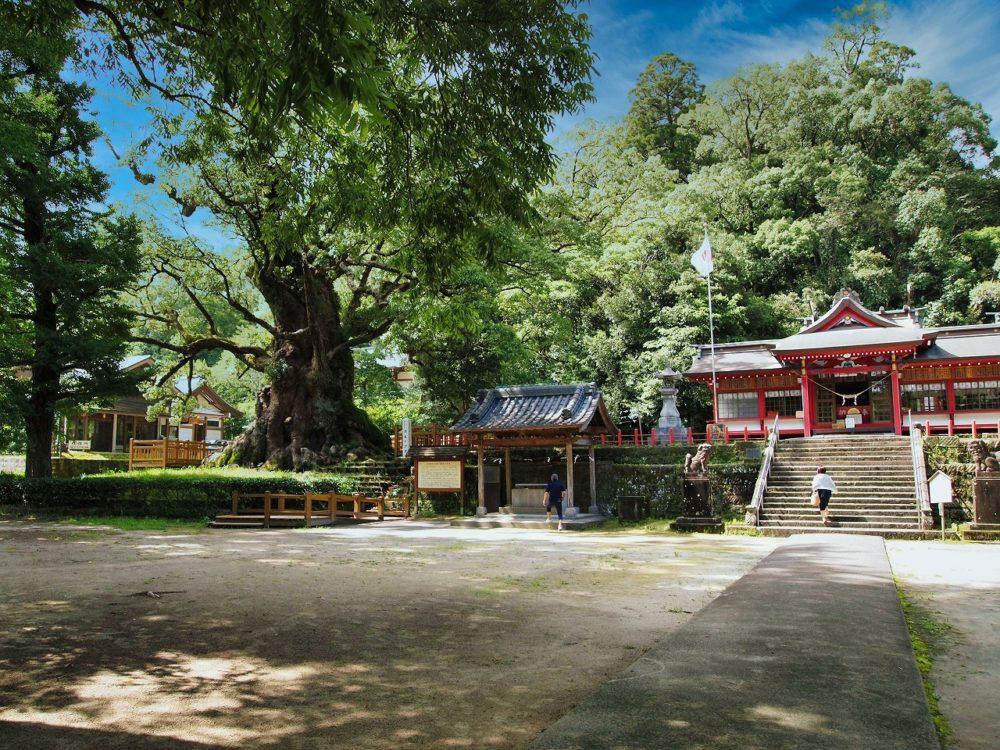 大クスと蒲生八幡神社