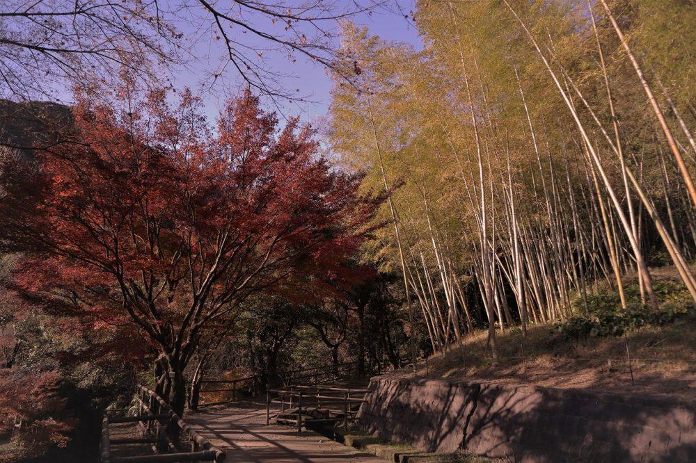 江南竹林と紅葉