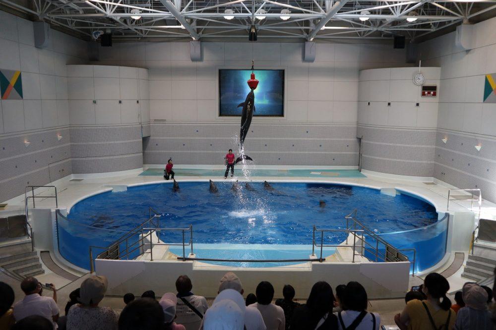 イルカの演技(室内)