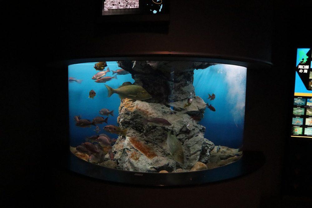 鹿児島県本土側の魚