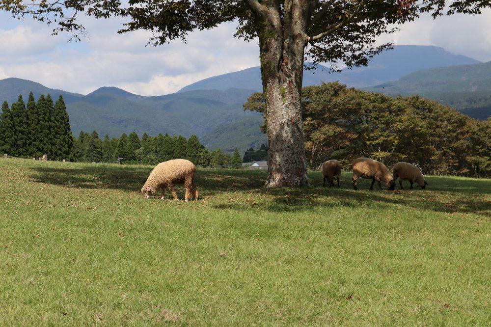 木の下の羊たち