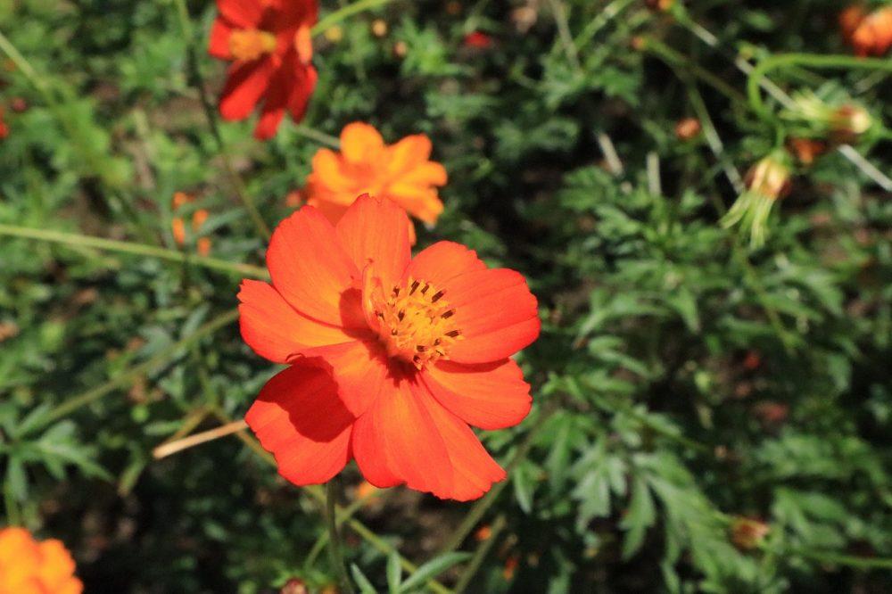 吉野公園の花